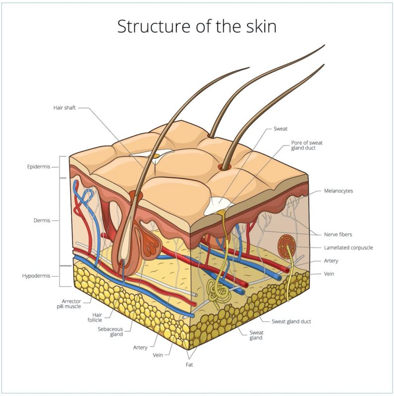 structure of your skin refoem skincare